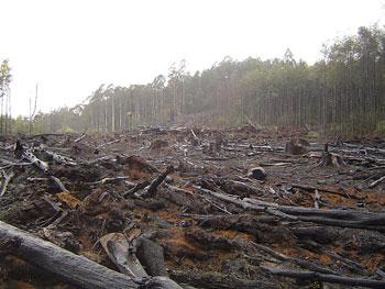 Ille6al loging…..[penebangan hutan secara liar…